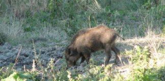 Danni fauna selvatica approva graduatoria sottomisura 4.4