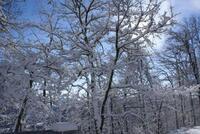 Nevicata dic 07  078.JPG