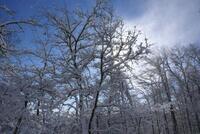 Nevicata dic 07  079.JPG