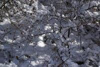 Nevicata dic 07  084.JPG