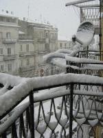 nevicata 060309 0014.jpg