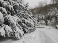 nevicata 09feb12 004.JPG