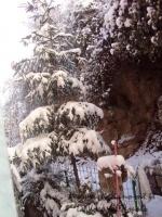 nevicata 10 feb 009.jpg