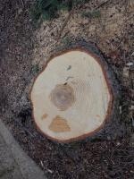 alberi ospedale  057.jpg
